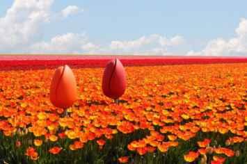 Tulpi stoel is bestand tegen ieder weertype