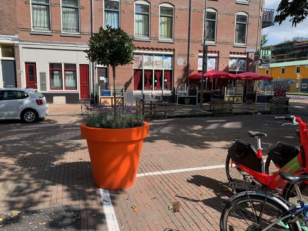Alvium plantenak fleurt iedere openbare ruimte op